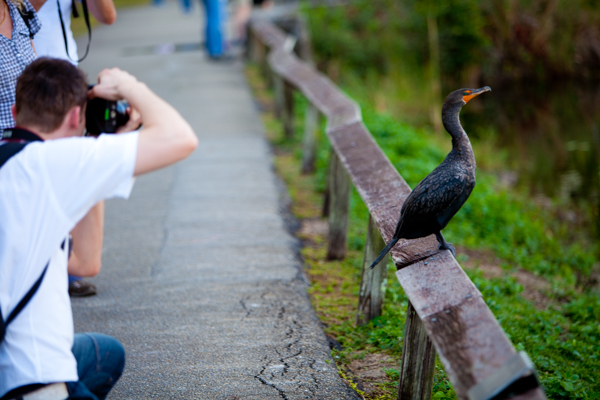 photographer taking a photo of a wild bird