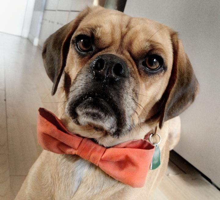 Pet Bow Tie Sewing Pattern for Dogs