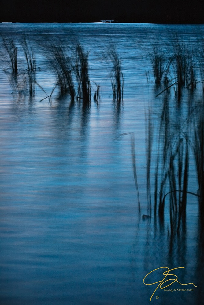Reeds on the edge of a pond captured under the moonlight
