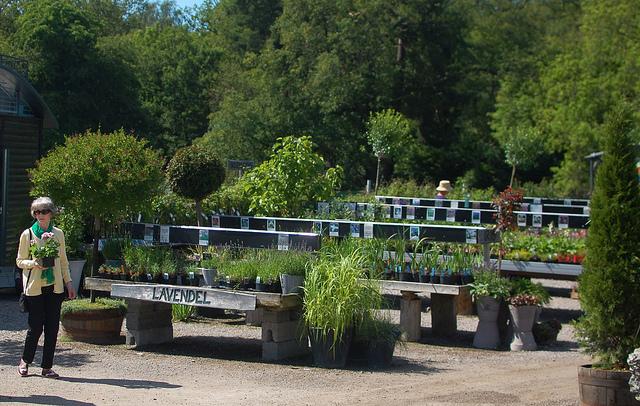 Herbs, perennials, and shrubs at Swedish nursery