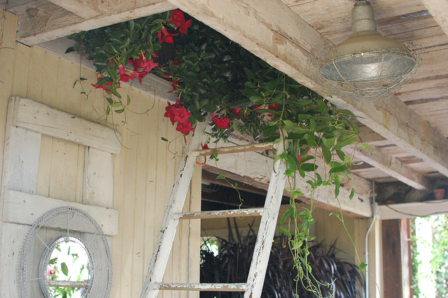 Flowers Growing From an Attic