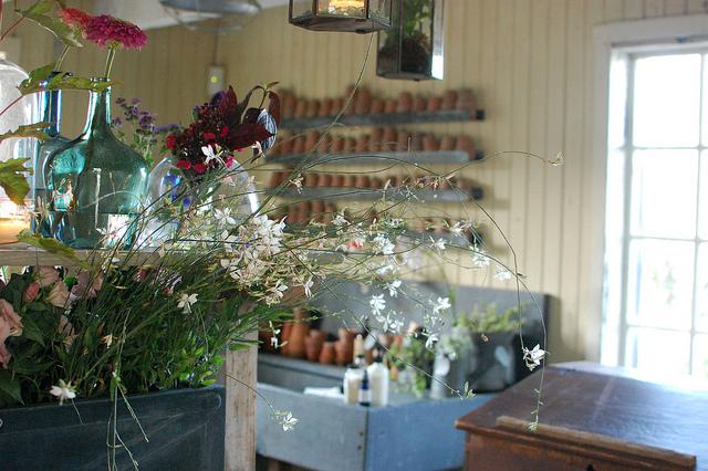 Wildflowers on Display at Terrain