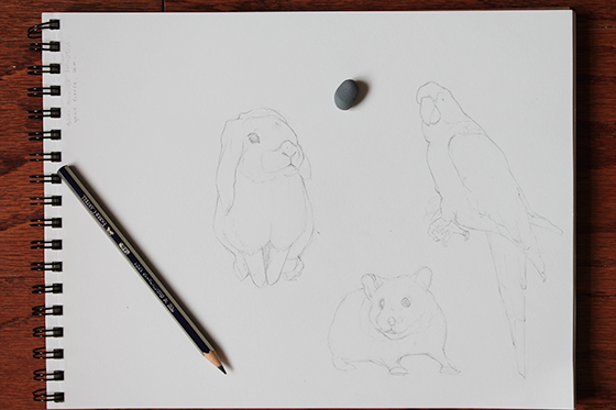 bunny, hamster and parrot lineart
