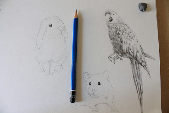 bunny, hamster and parrot step 7