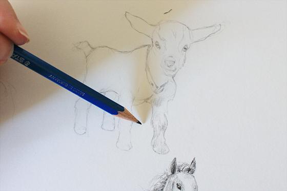 Drawing goat hair