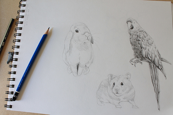 bunny, hamster and parrot step 9