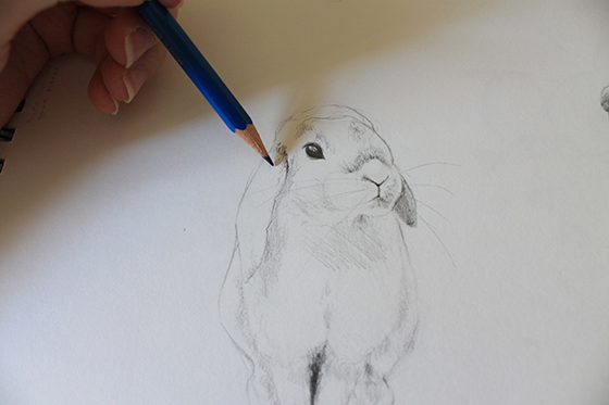 bunny, hamster and parrot step 10