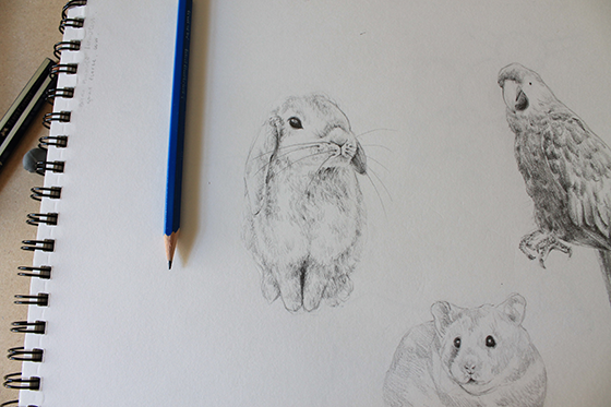 bunny, hamster and parrot step 12