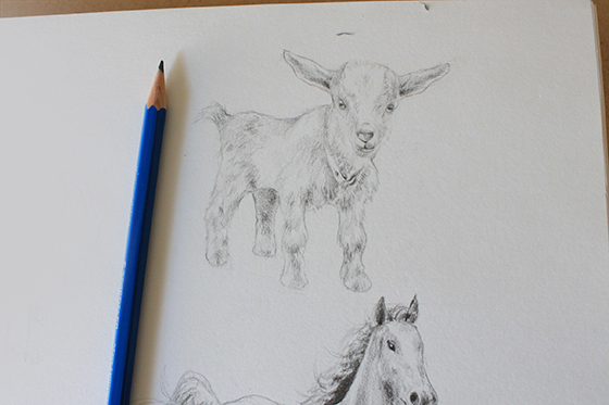 Completed goat drawing