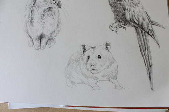 bunny, hamster and parrot step 14