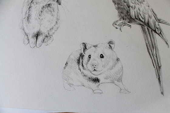 bunny, hamster and parrot step 15