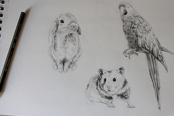 bunny, hamster and parrot step 17
