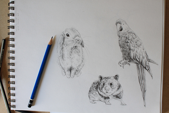Sketches of a bunny, hamster and parrot
