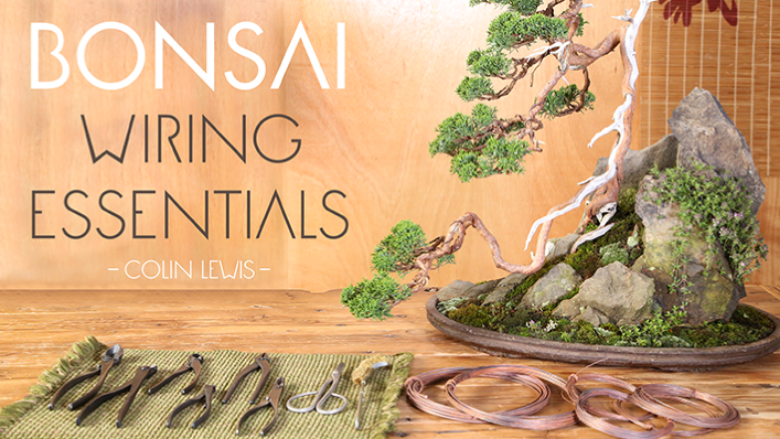 Bonsai Wiring Essentials Craftsy Class