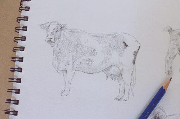 Shading cow drawing