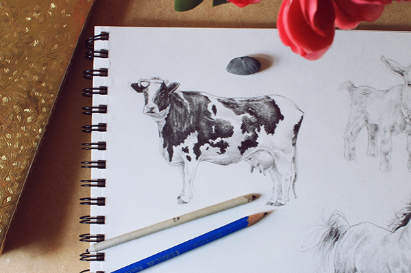 Final cow drawing