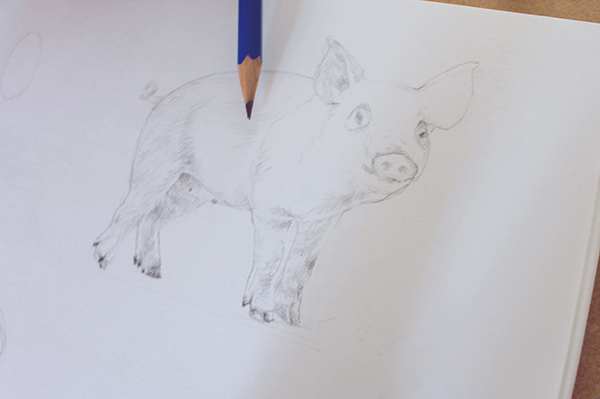 Pig shading