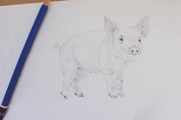 Toning pig drawing
