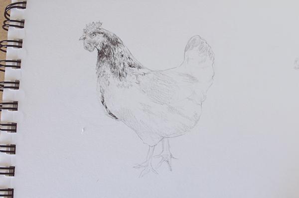 Expanded hen face details