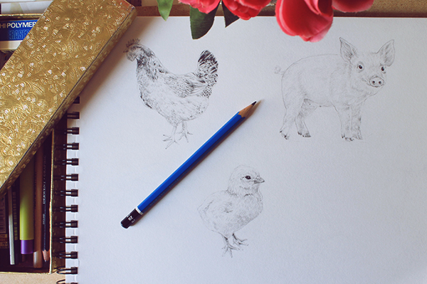 drawing a hen 005