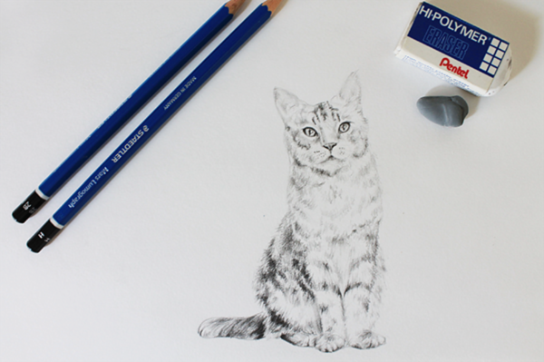 Learn how to draw a realistic cat with Craftsy's step-by-step tutorial