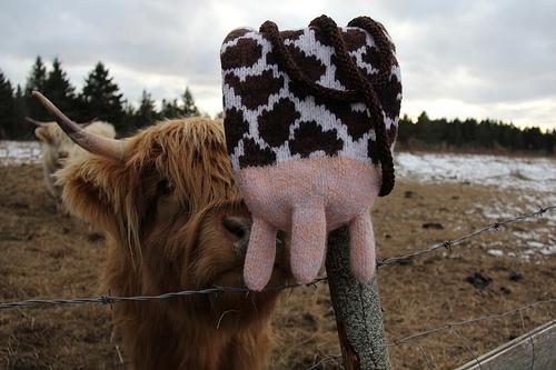 Udderly Divine Cow-themed knitting pattern