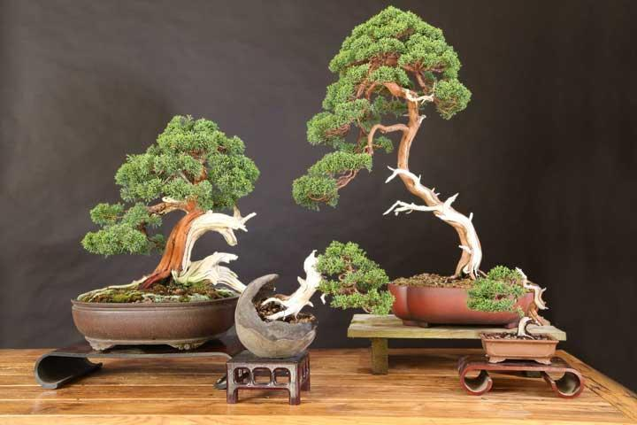 Multiple Varieties of Bonsai