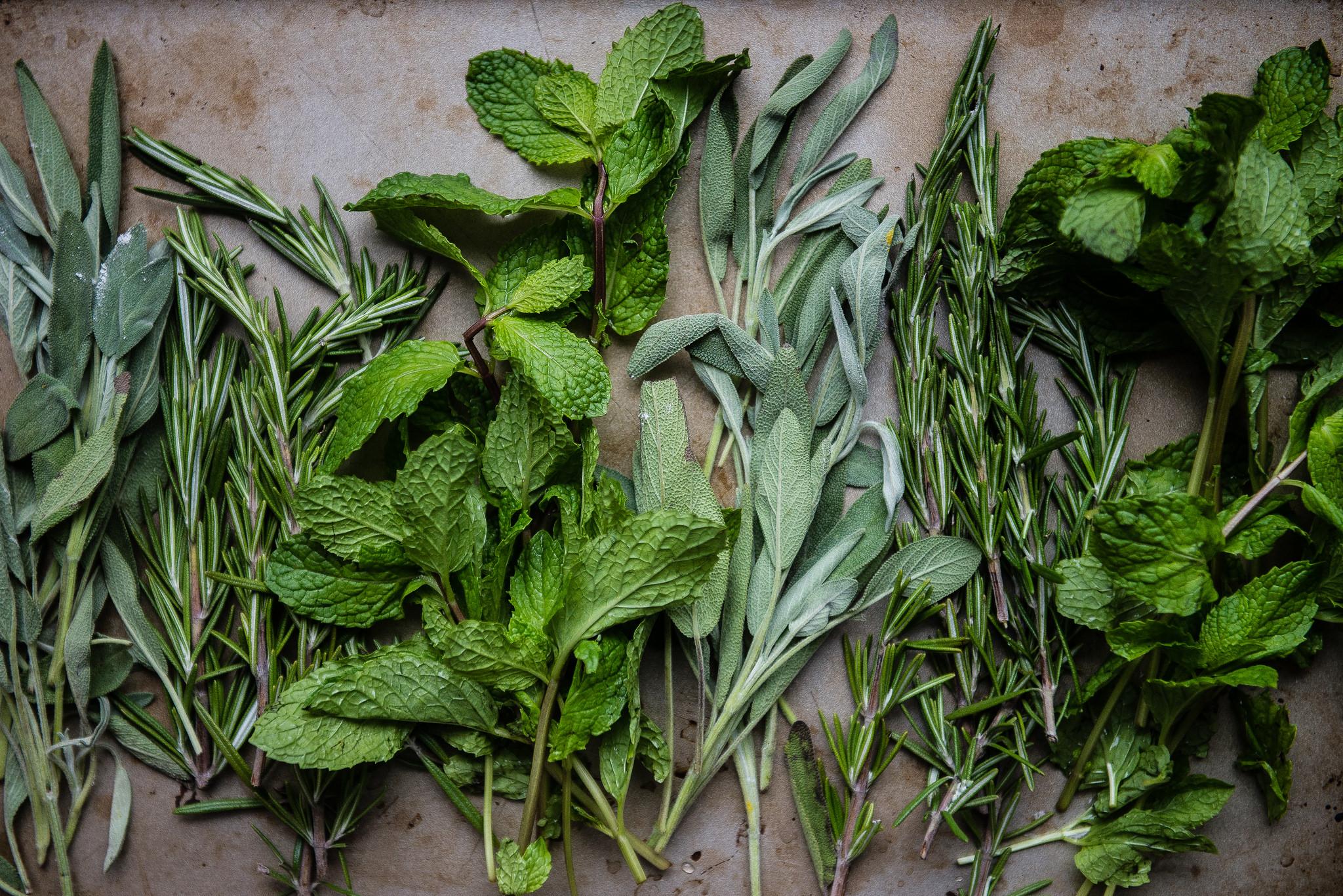 Fresh herbs on Bluprint!