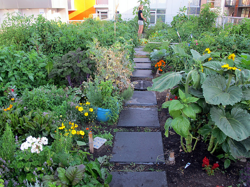 This rooftop garden grows delicious food.