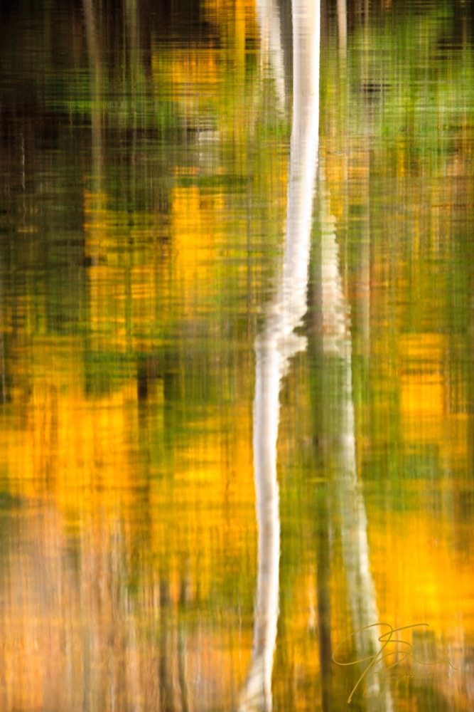 Bright white birch and golden fall color reflected on the water.