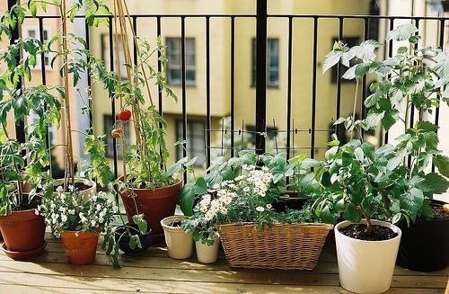 This balcony garden is the simplest type of urban garden design.