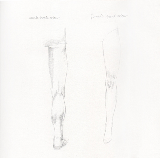 male and female leg muscles shadows