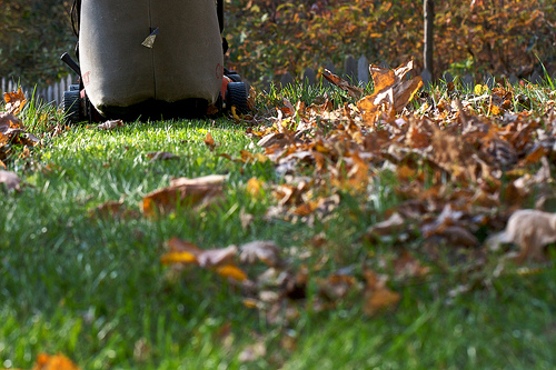 mowing fall leaves  is a valuable fall garden chore, by  Chiot's Run