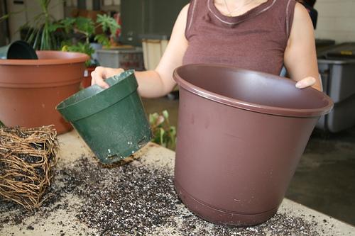 Woman transplants into a bigger pot.