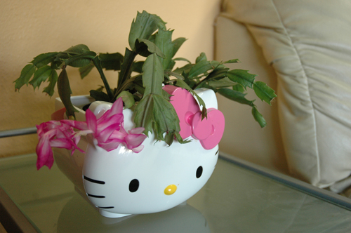 Miss Kitty-inspired pot with Christmas cactus