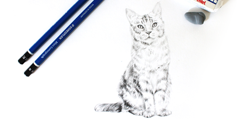 Learning to draw a cat!