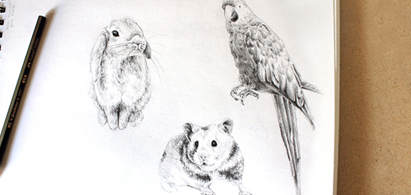 Learning to draw little critters!