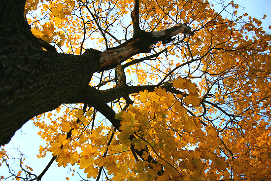 Fall Planted Trees