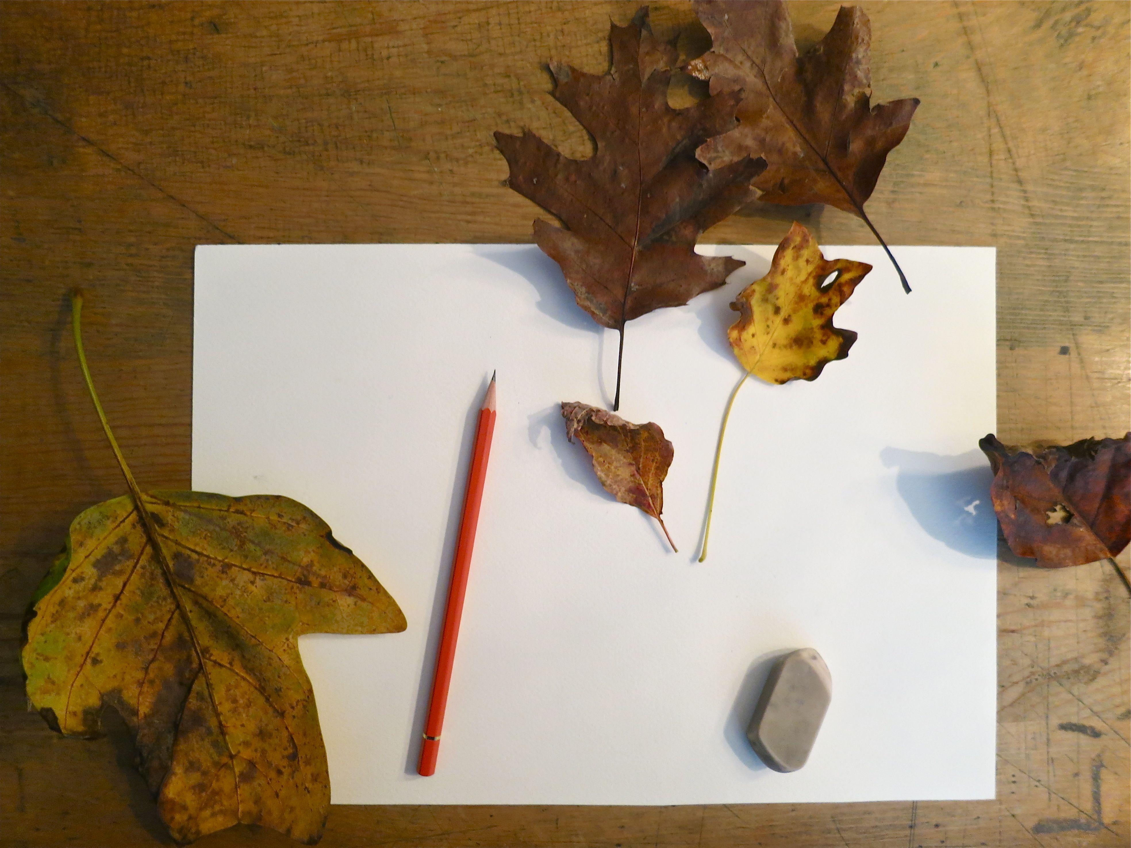 leaf models