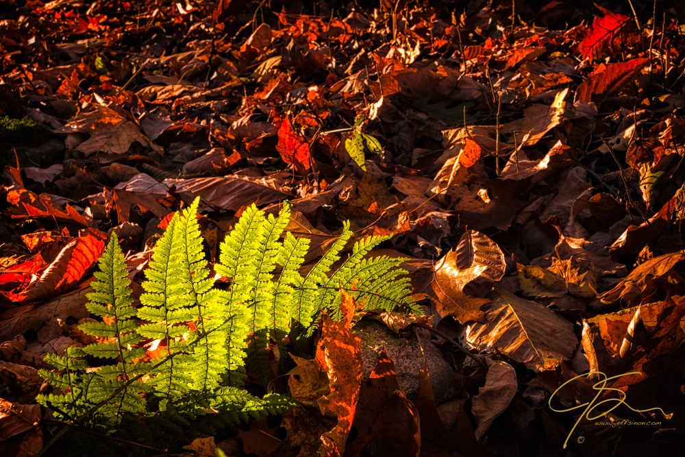 A bright green fern leaf among a sea of fallen leaves