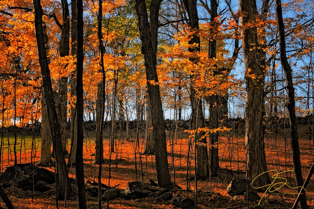 Warm light on what's left of the fall foliage.