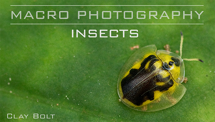 Macro Photography: Insects