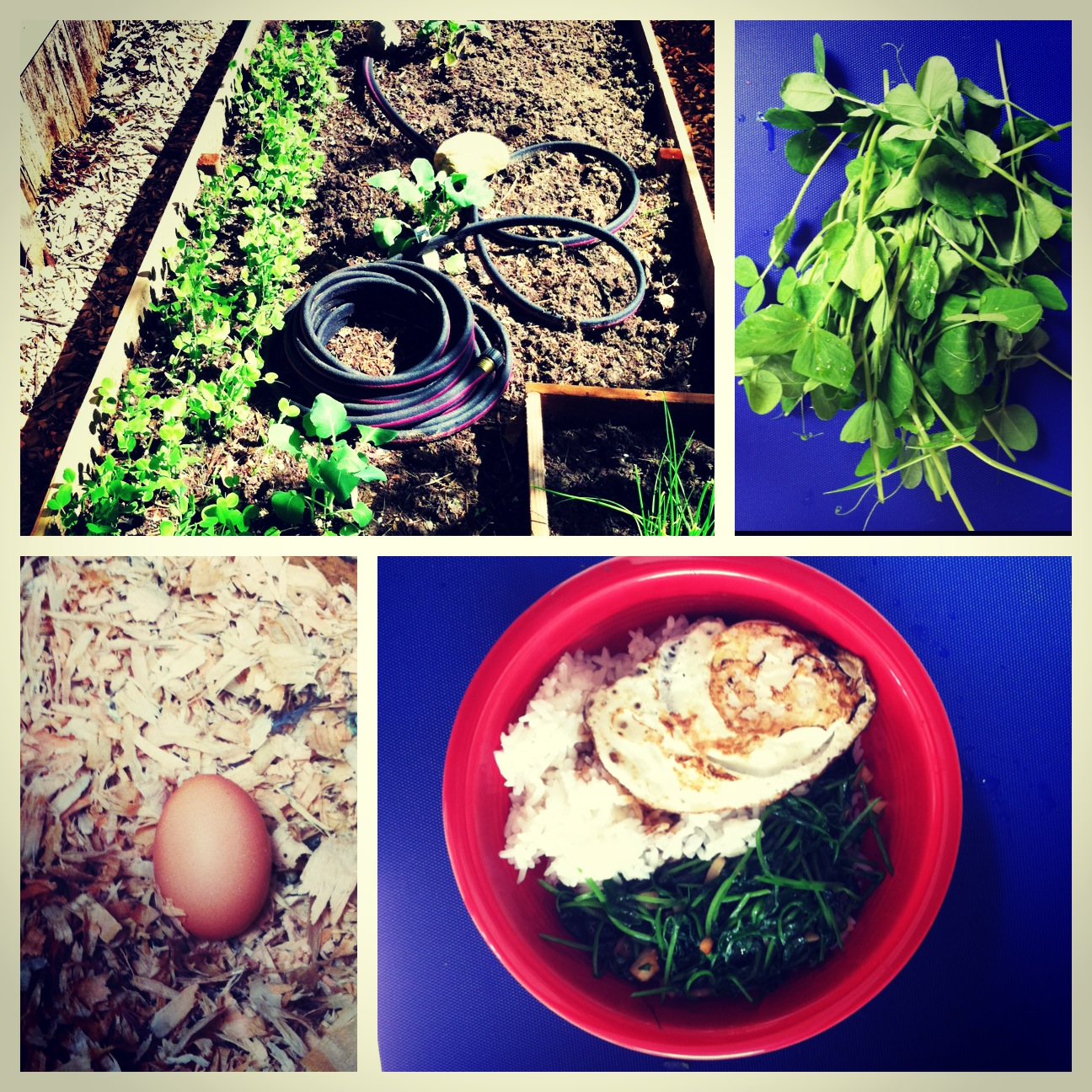 Collage of Gardening Images