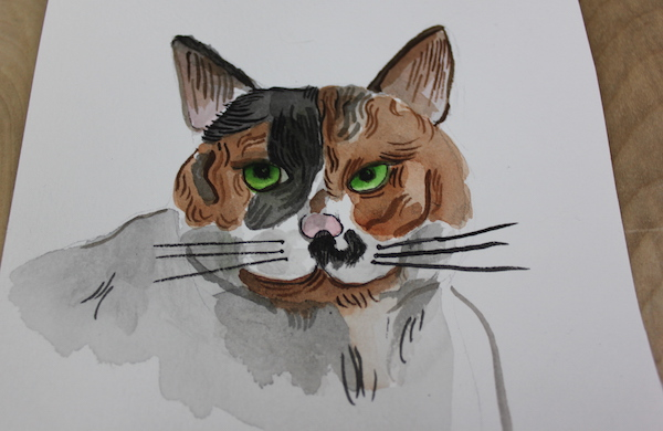 detail of cat with lines