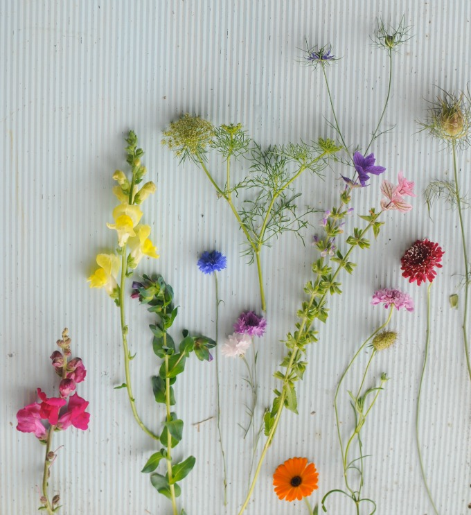 Cut flowers from hardy annual plants