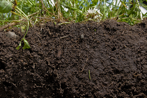 Healthy soil is the result of growing cover crops