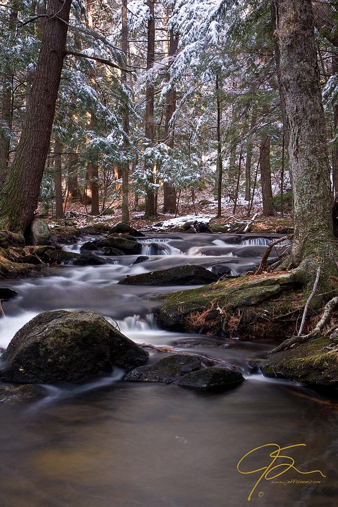 Forest Stream - Unedited