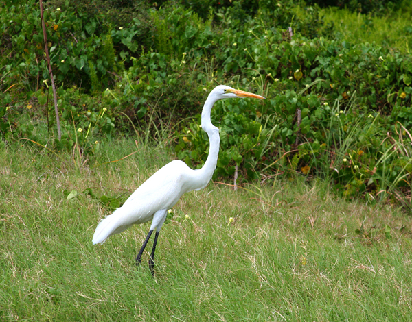 Wildlife example
