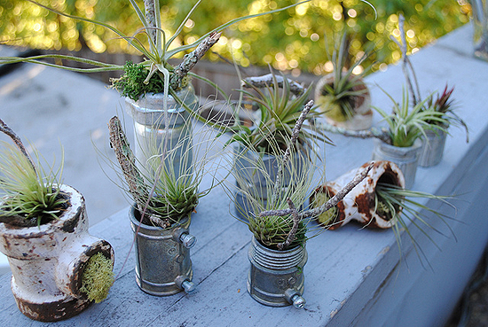 Cute air plants in upcycled containers