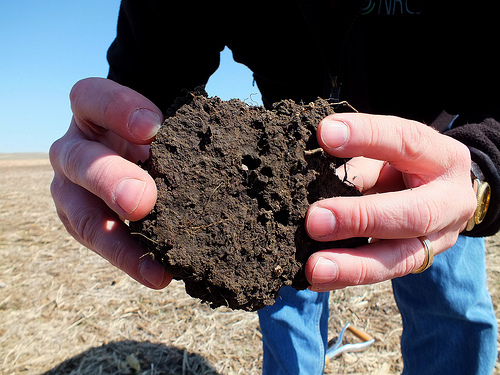 Healthy soil with organic matter